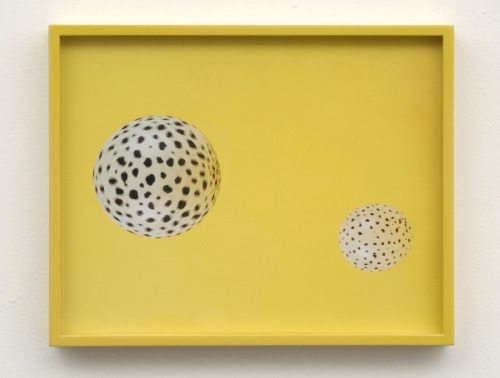 Elad Lassry Untitled (Cheetah)