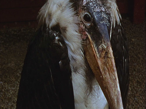 Deborah Stratman's film Ray's Birds