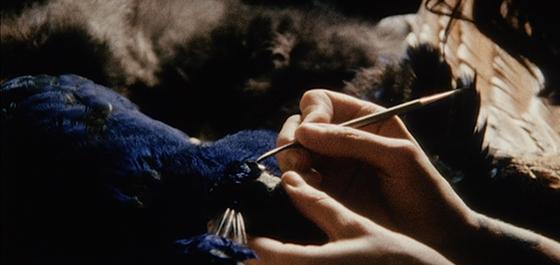 Still image from Andrew Kim's 'The Peacock' | Image: Ann Arbor Film Festival